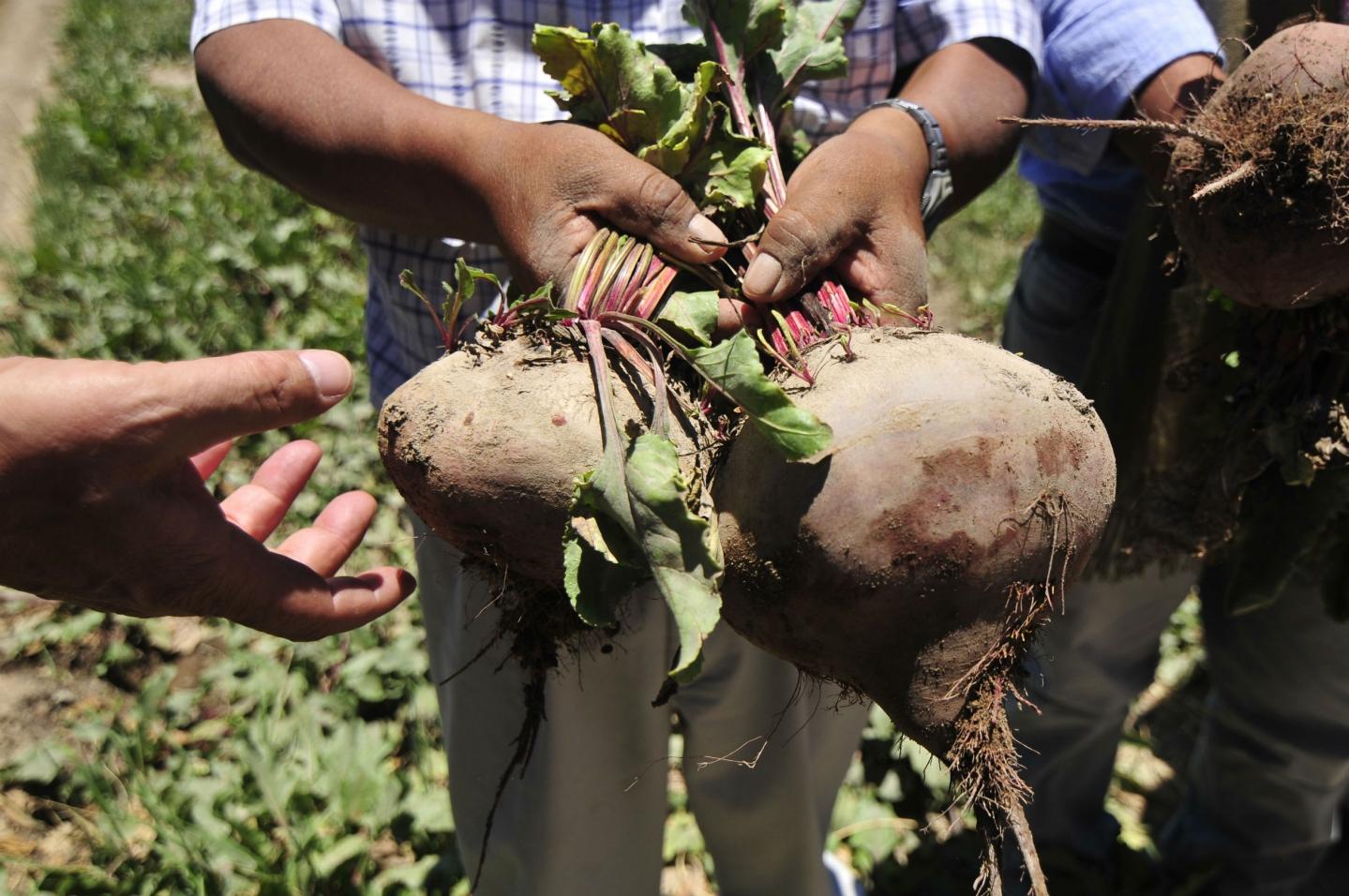 Ministro de Agricultura descarta alza en el precio de los alimentos tras sistema frontal