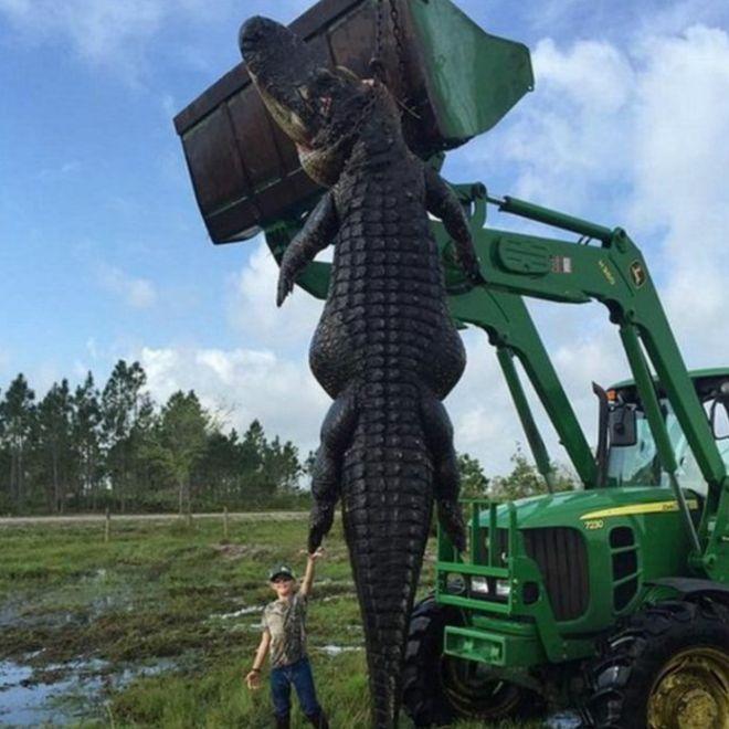 El caimán era tan grande que se requirió de un tractor para moverlo. En la foto, con el hijo de 9 años del cazador.