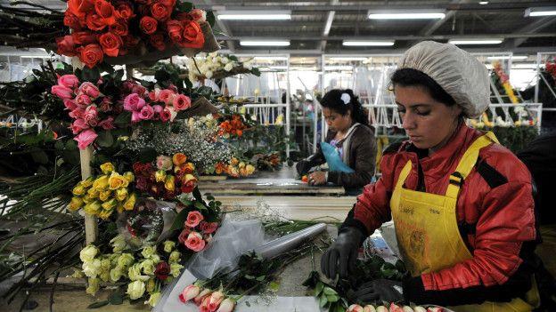 Las flores son una de las exportaciones más importantes de Colombia, el país que más ha mejorado en el índice del Banco Mundial que mide el ambiente para los negocios.