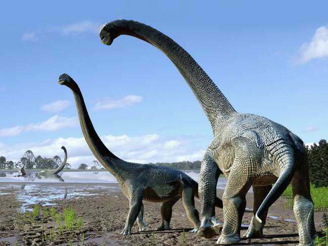 Descubren Dos Dinosaurios Herbivoros De Cuello Largo En Australia Tele 13 Los vegetarianos eran tan grandes y pesados como doce elefantes juntos. t13