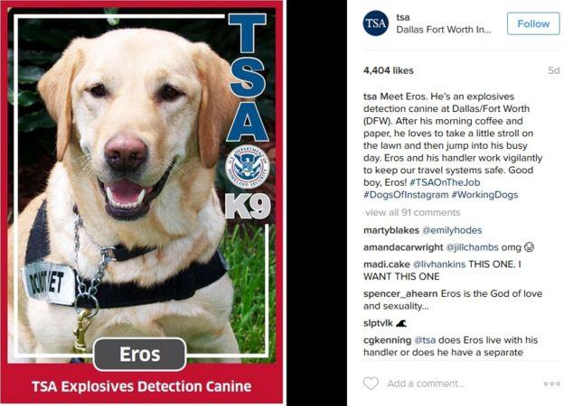Eros es uno de los perros detectores de explosivos de la TSA que fascinan a sus seguidores de Instagram.