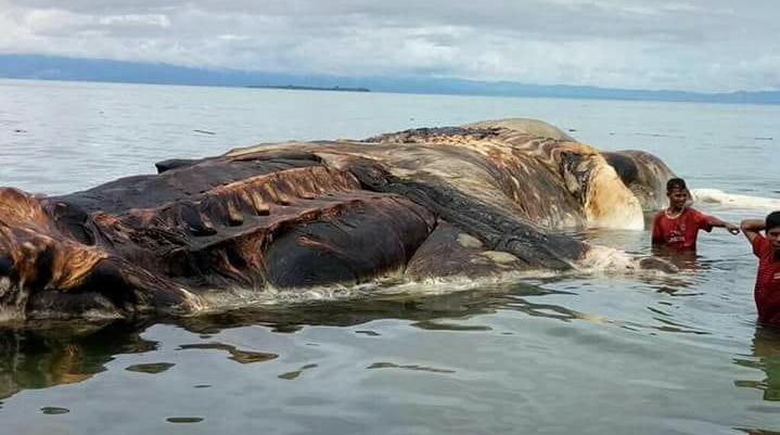 Desconocida criatura marina