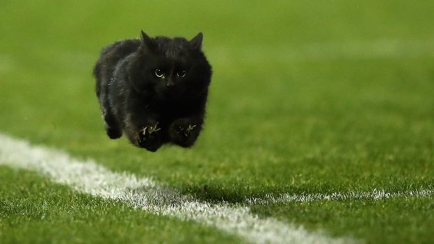 Los gatos negros estaban asociados a las brujas.