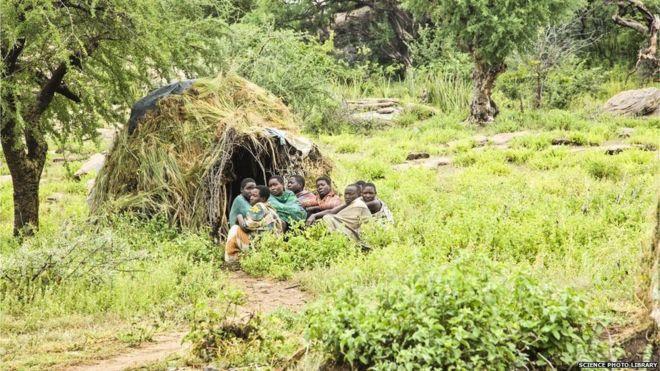 Los Hazda resultaron un sujeto de estudio ideal porque su estilo de vida es muy similar al de los cazadores-recolectores del pasado.