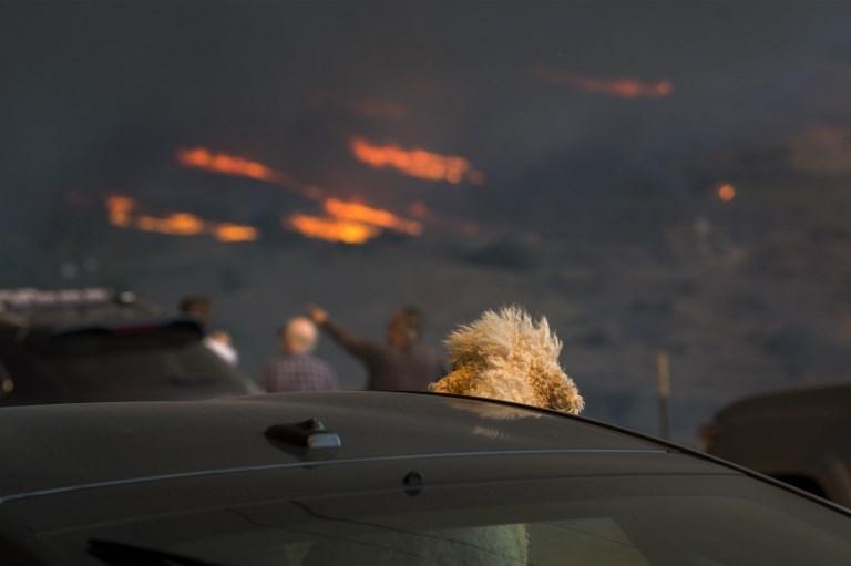 ANIMALES INCENDIO CALIFORNIA