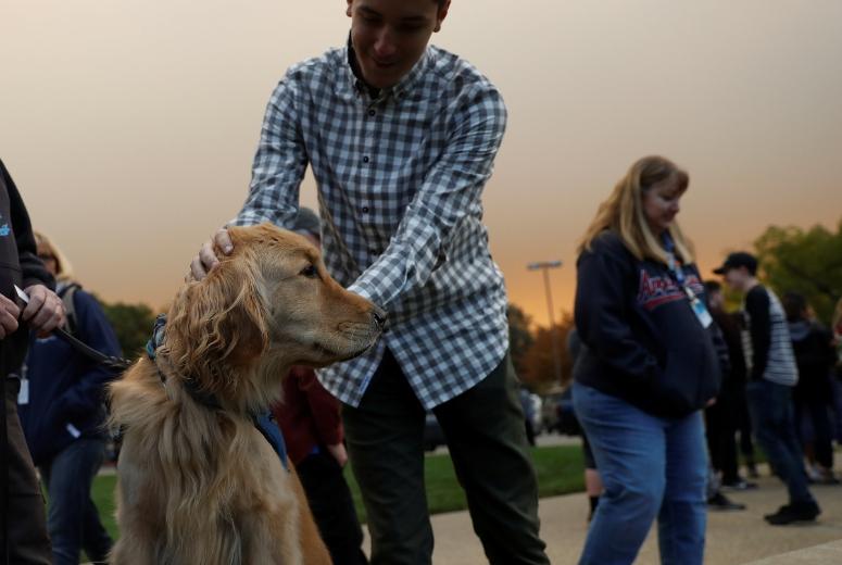 Mascotas incendio California