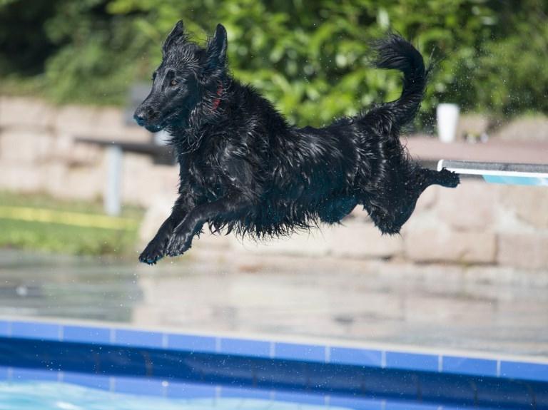 Primer hotel para perros en Booking.com está en Argentina