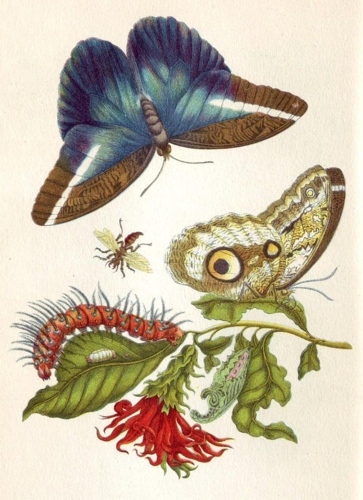 Ilustraciones de María Merian