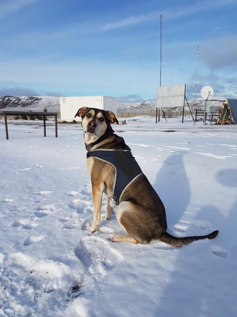 Yulio, el perrito de Aduanas que protegió las fronteras de Chile se retira tras 5 años de servicio