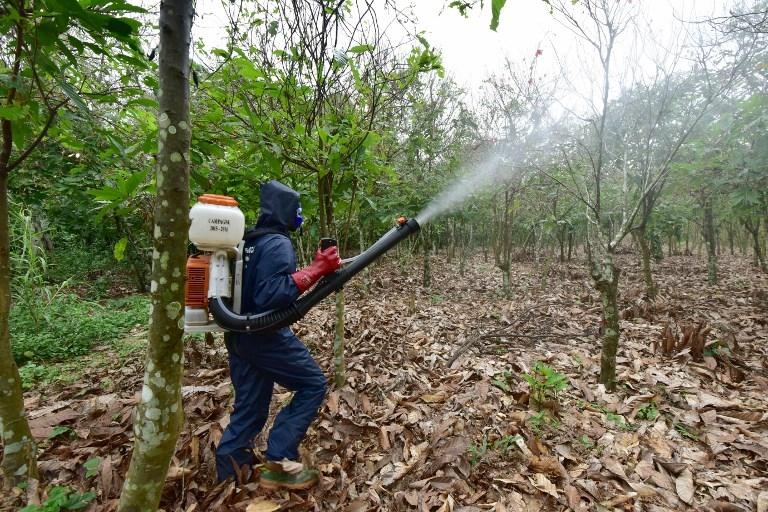 Disminución masiva de insectos tendrá consecuencias catastróficas