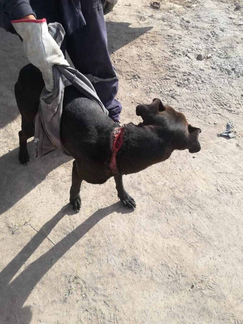 Hombre será formalizado por profunda herida de perro