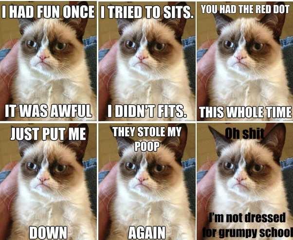 Grumpy Cat: muere la gata más famosa (y enojona) de tus memes