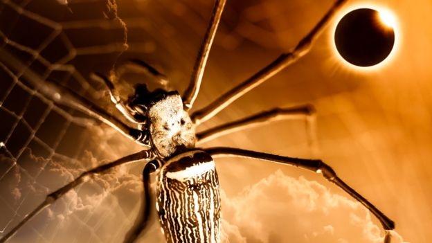 Un estudio de 1991 observó que un tipo de araña comenzó a desarmar su red cuando comenzó el eclipse y volvió a rearmarla cuando terminó.