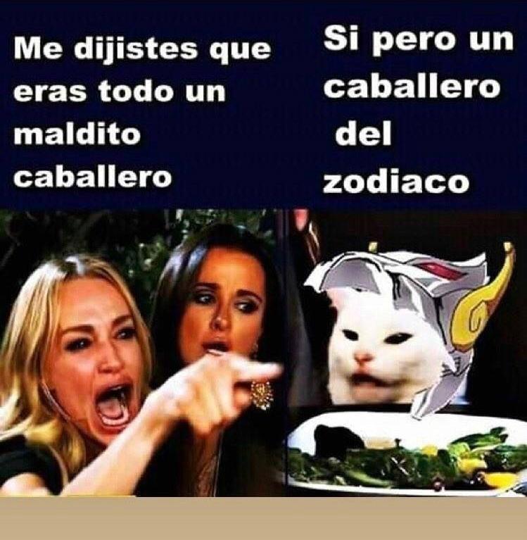 El Origen Del Meme Viral Del Gato Blanco Y La Mujer Que Le Grita