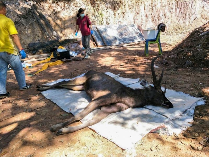 Hallan ciervo muerto con siete kilos de plástico en su estómago