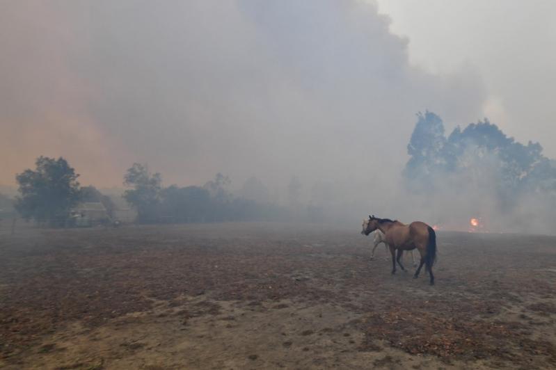 Katastrofalni požar u Australiji - Page 3 1578001722-0001nd4li
