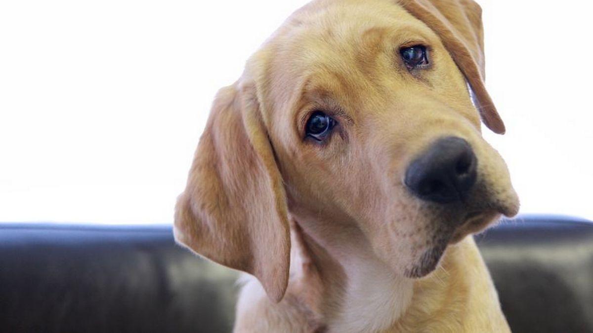 Perro callejero llora tras recibir comida | Tele 13