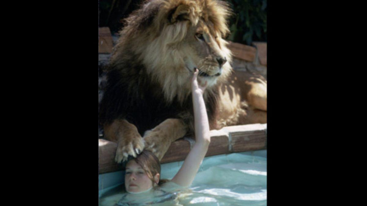 [Foto] La increíble vida de una adolescente Melanie Griffith junto a un león