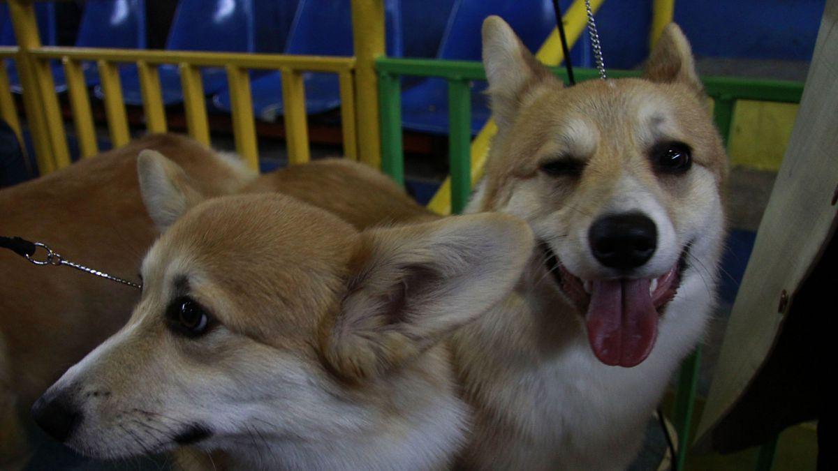 Comisión de Salud del Senado despacha proyecto de tenencia responsable de mascotas