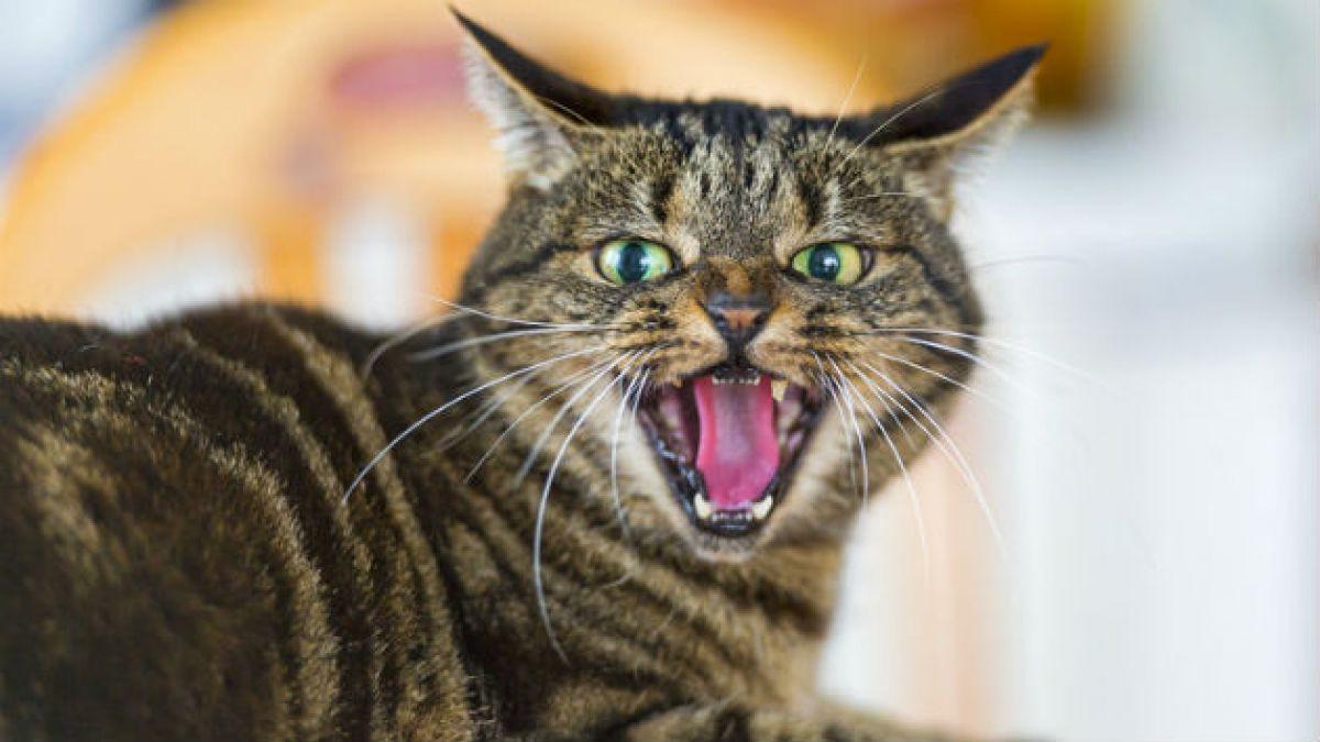 Estudios definen a los gatos: Egoístas, insensibles y nocivos para el medio ambiente