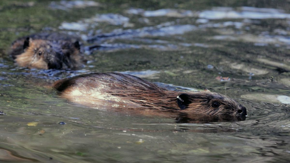 Estudio revela que existen 119 especies exóticas invasoras a lo largo del país