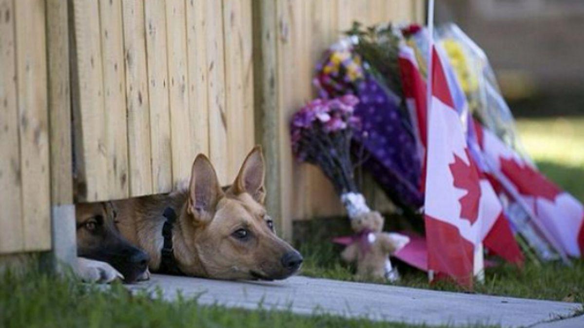 El desconsuelo de los perros del guardia asesinado en el atentado en Canadá