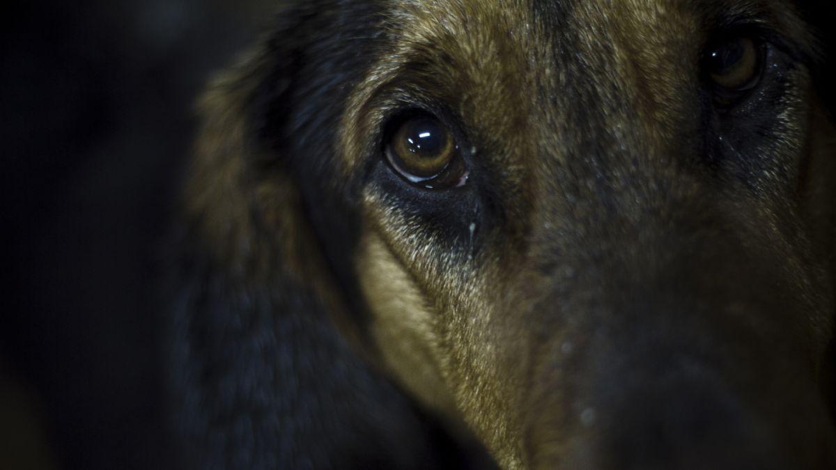 Condenan a 300 días de presidio menor a hombre que disparó a perro