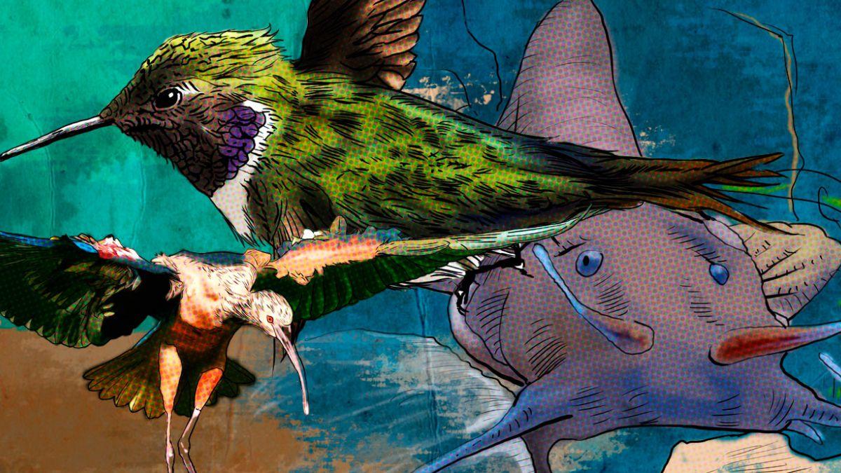 Más de 50 especies se ven amenazadas en Chile por la prolongada sequía