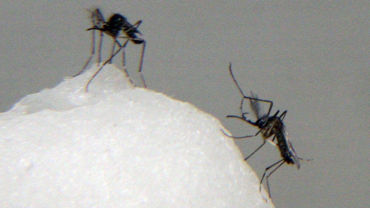 ISP confirma nuevo caso de chikungunya en Isla de Pascua