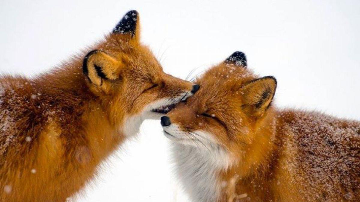 Las fotografías de animales más esperanzadoras del 2014