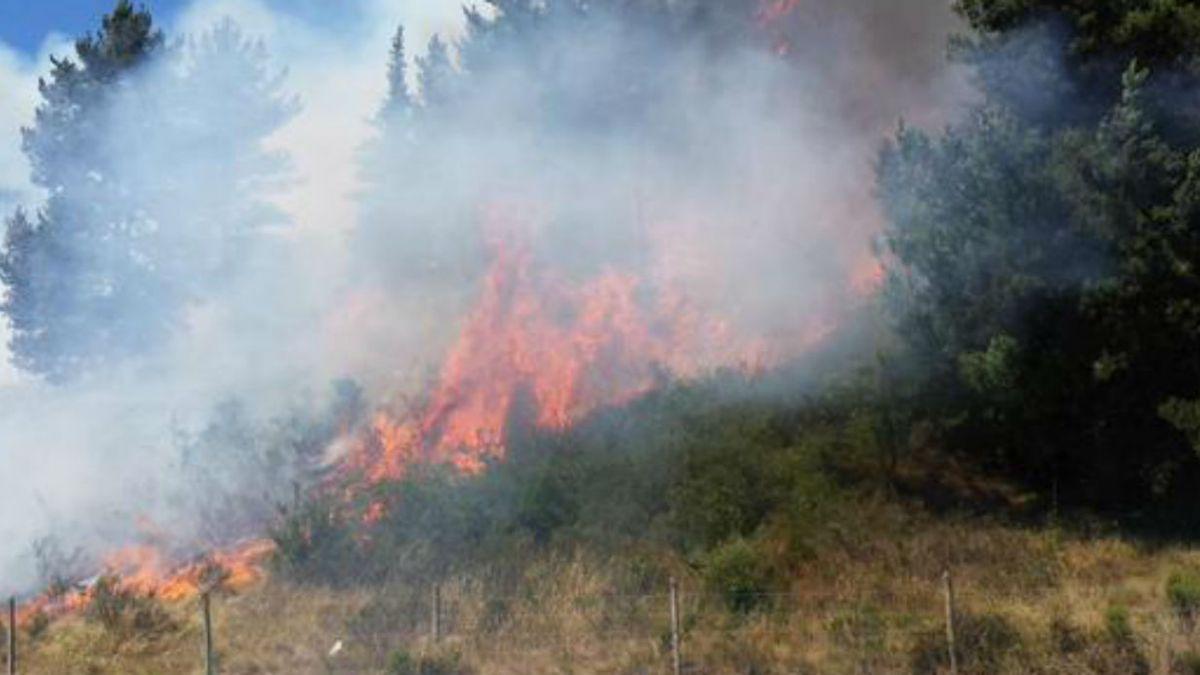 ONEMI declara Alerta Roja para Villa Alemana por incendio forestal