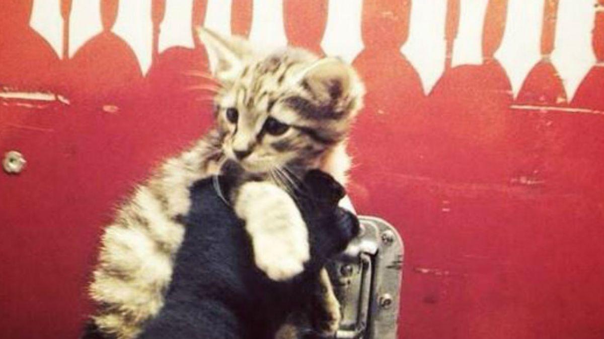Grupo Slayer rescata a gatito abandonado y lo da en adopción