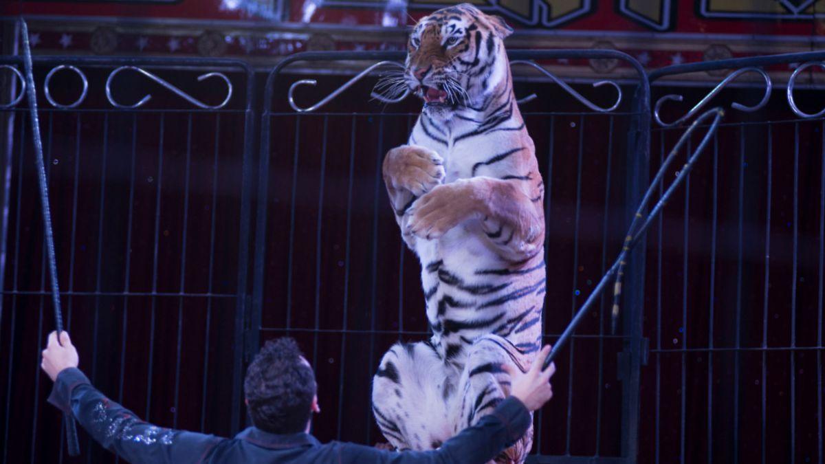 México: Diputados prohíben uso de animales silvestres en circos del país