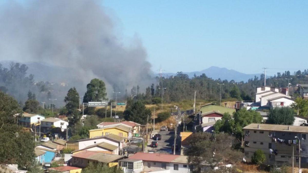 Declaran Alerta Roja en Viña del Mar por incendio en el Jardín Botánico