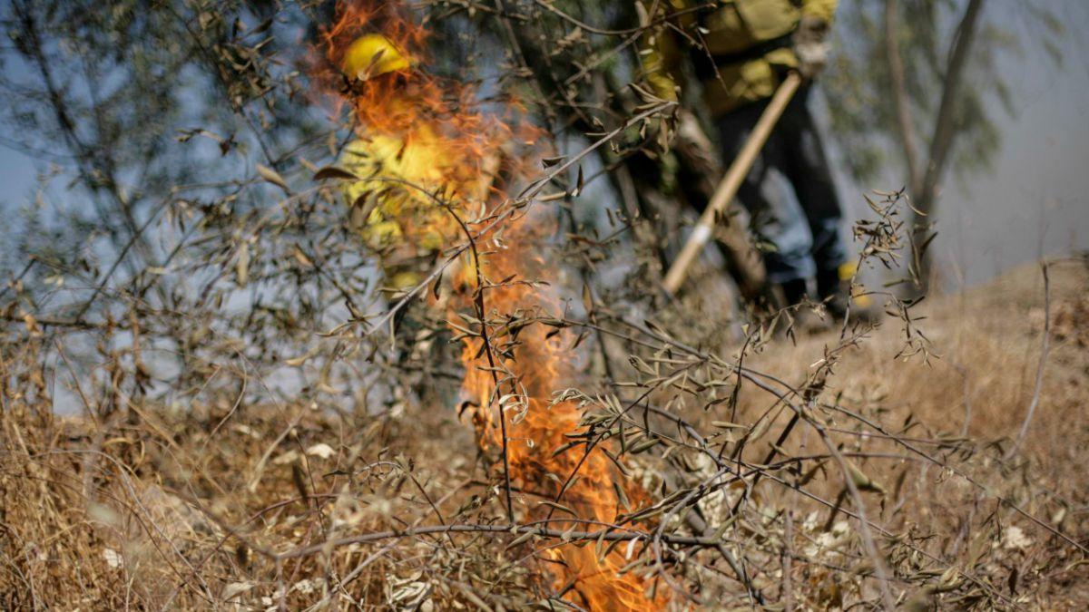 Incendios Forestales: En 2014 se registraron casi 12 mil siniestros menos que en 2013