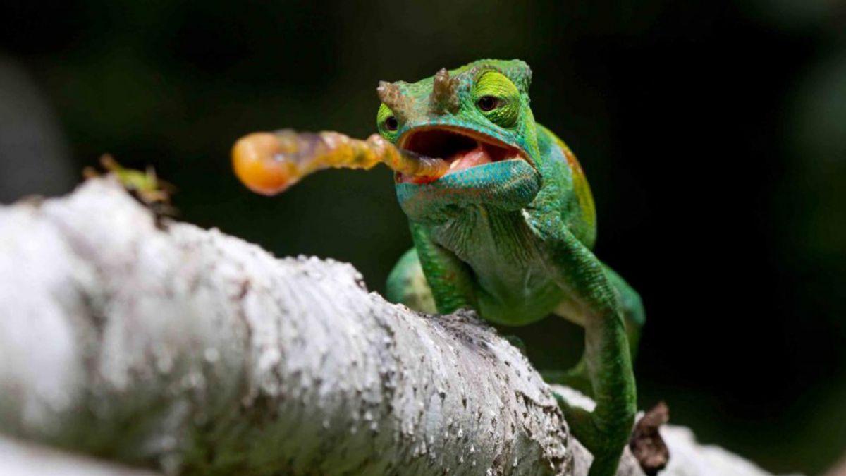 Las mejores fotos de animales y vida salvaje de 2014   Tele 13