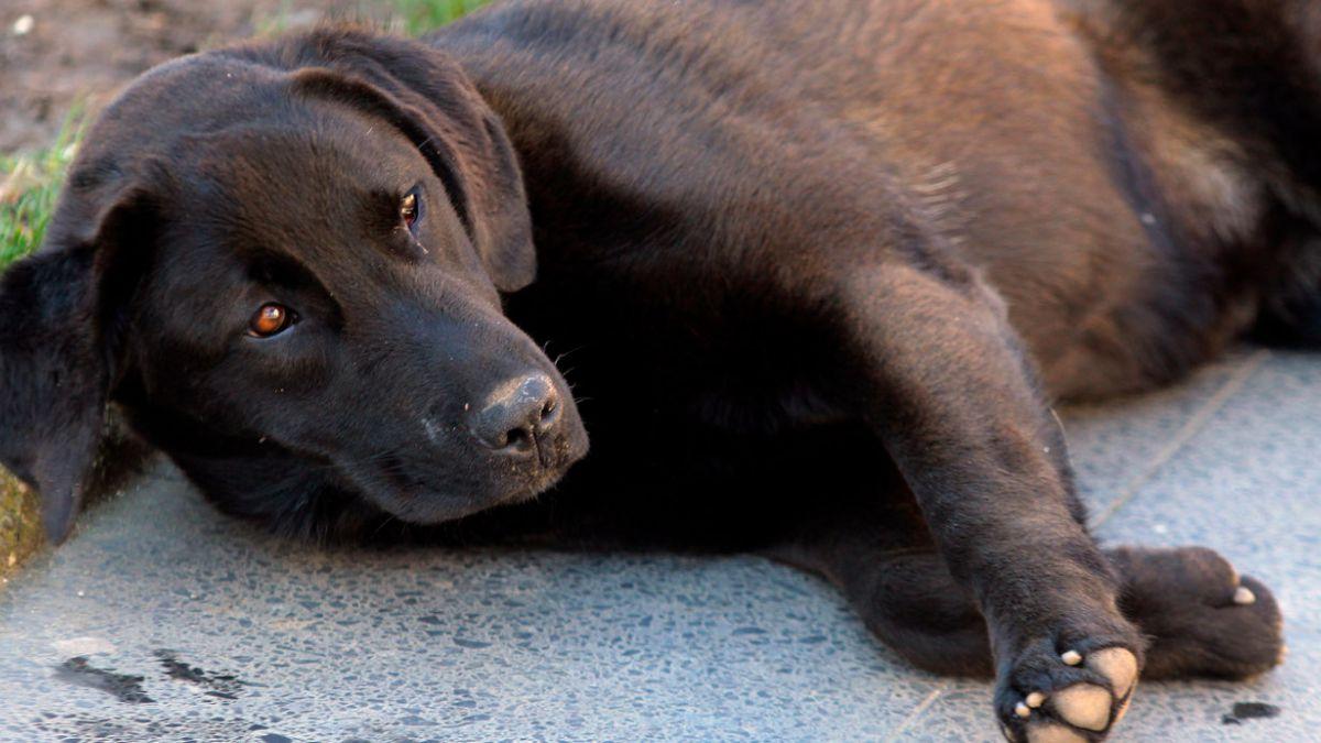 Tenencia responsable de mascotas: Proyecto pasa a comisión mixta