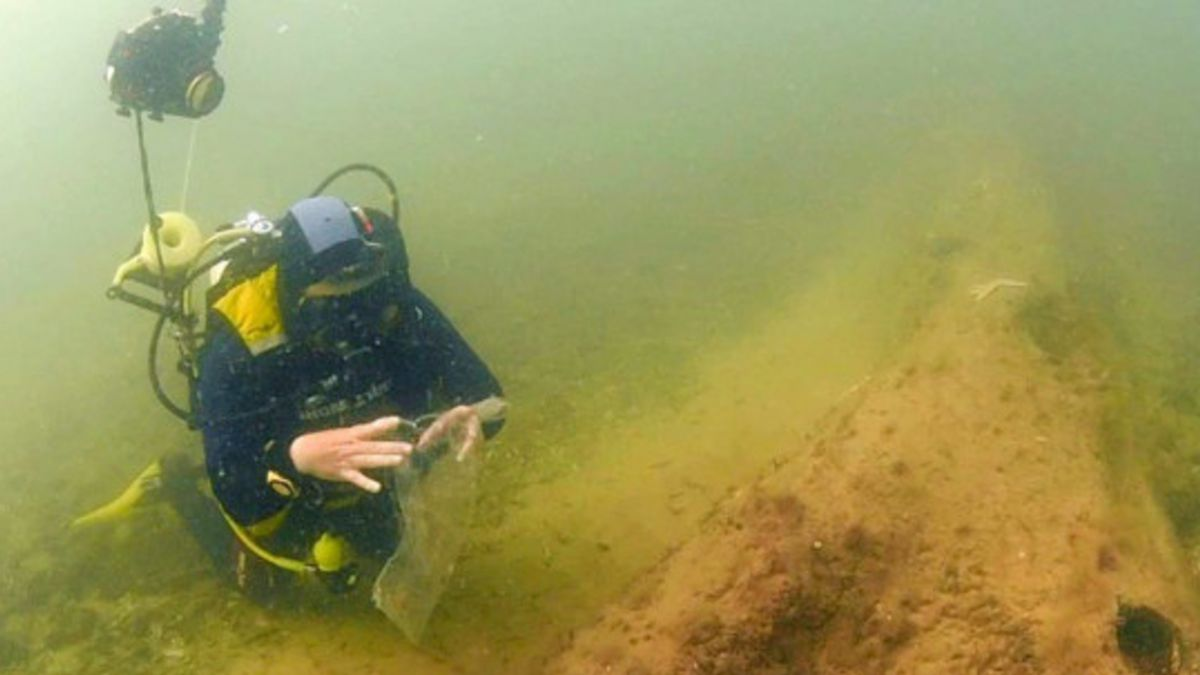 Descubren bosque de 10 mil años hundido bajo el mar