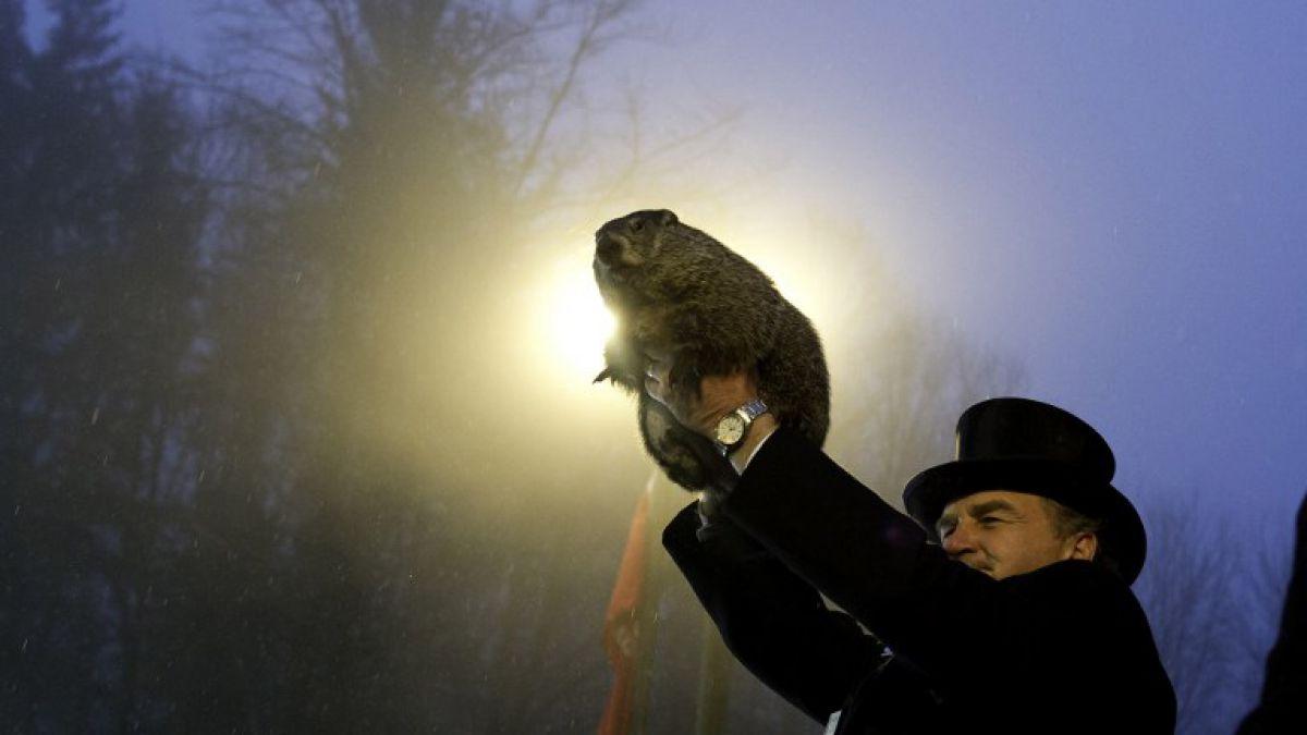 El Día de la Marmota: una tradición que hoy se volvió a vivir en EE.UU.