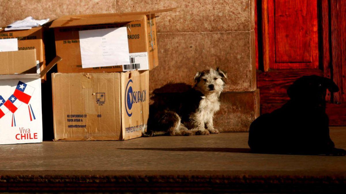 Ministerio de Agricultura suspende decreto que permitía caza de perros asilvestrados