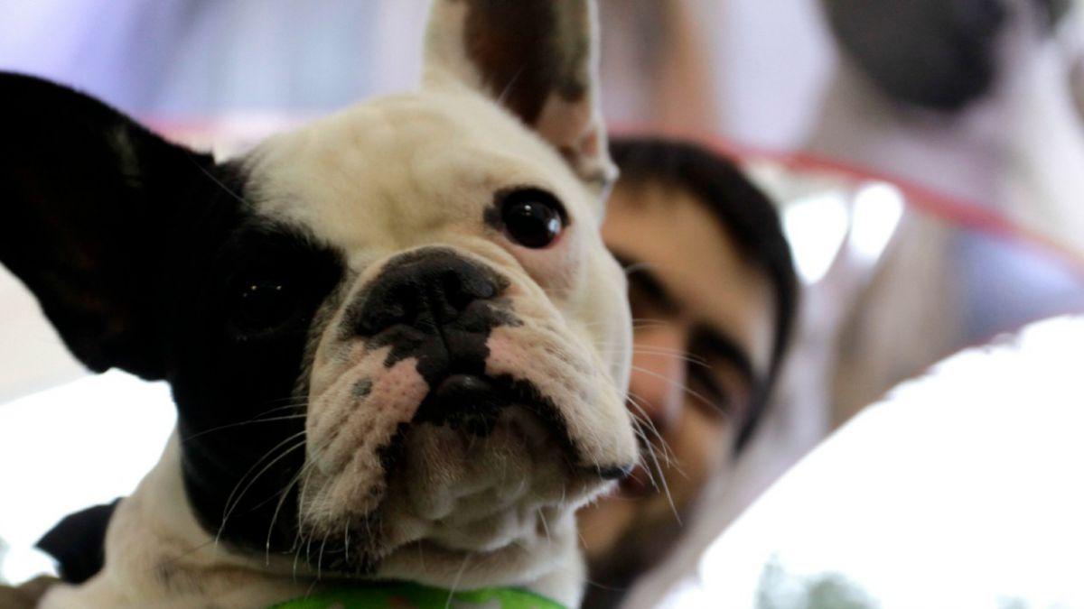 Todo lo que debe saber antes de viajar con tu mascota