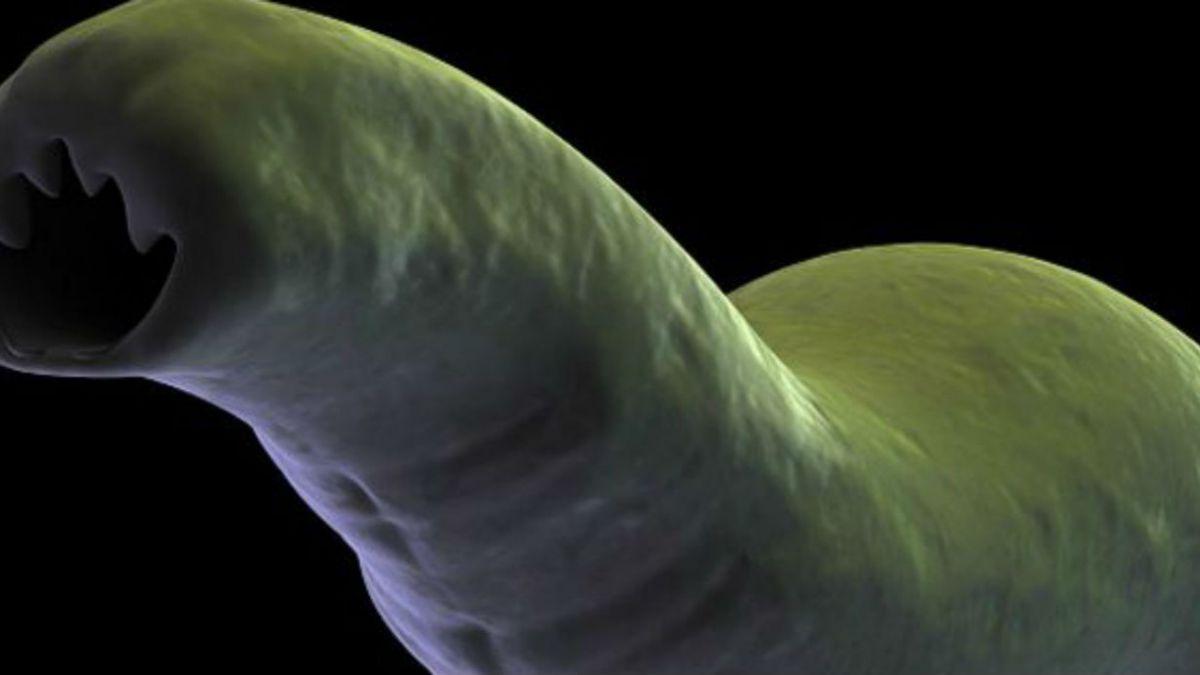 ¿Qué pasaría si todos los parásitos desaparecieran para siempre?