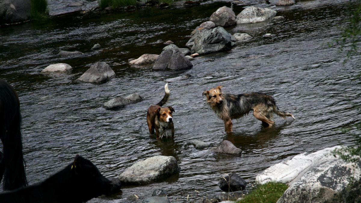 SAG y suspensión de normativa que permitía cazar perros: Nos faltó explicar