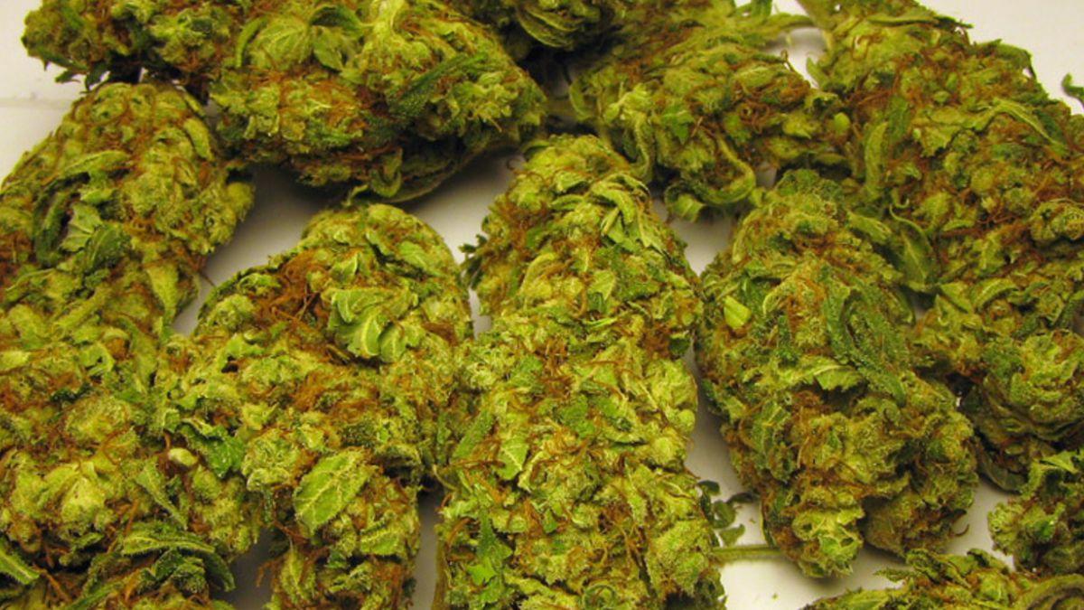 """Estudio: Consumo de marihuana tipo """"skunk"""" aumenta riesgo de psicosis"""