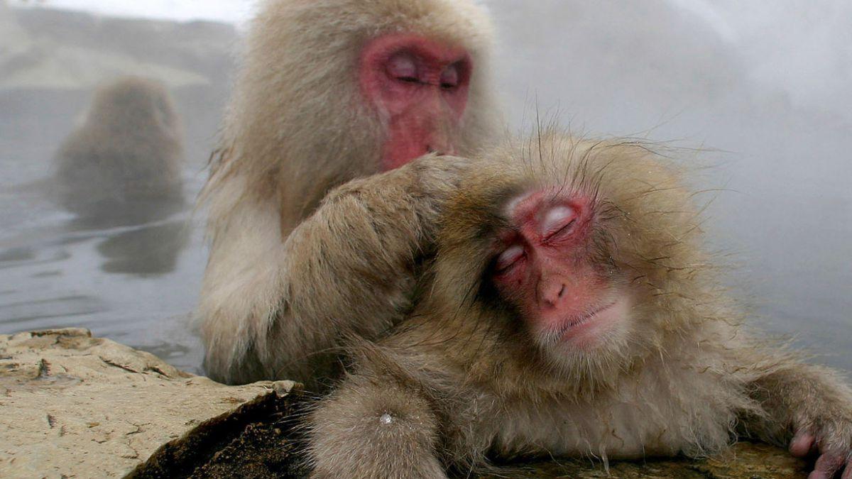 ¿Existen realmente los animales homosexuales?