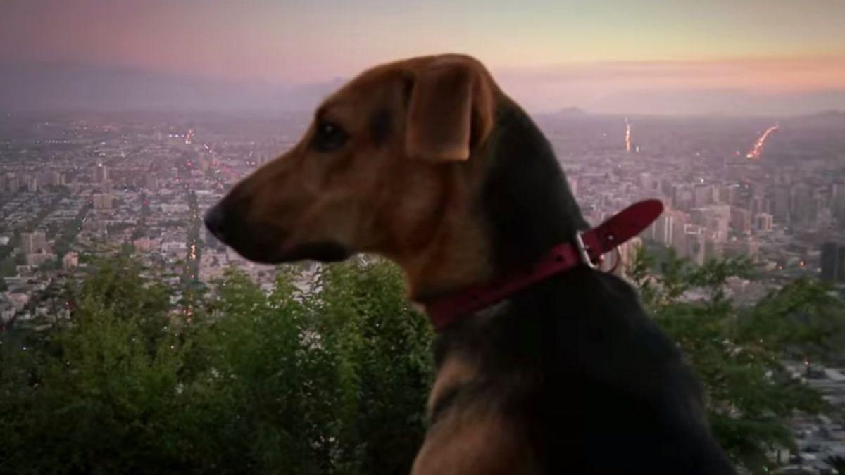 Director de Gringuito realiza película sobre el abandono de mascotas en Chile