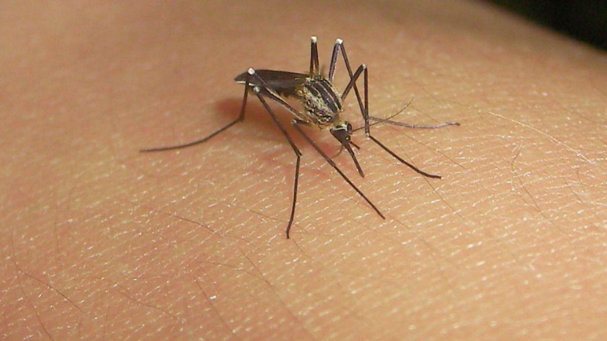 Minsal decreta alerta sanitaria por dengue en Isla de Pascua