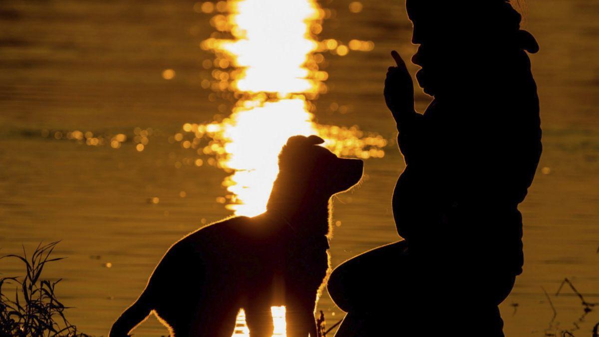 Cómo sabe tu perro si se puede fiar de ti