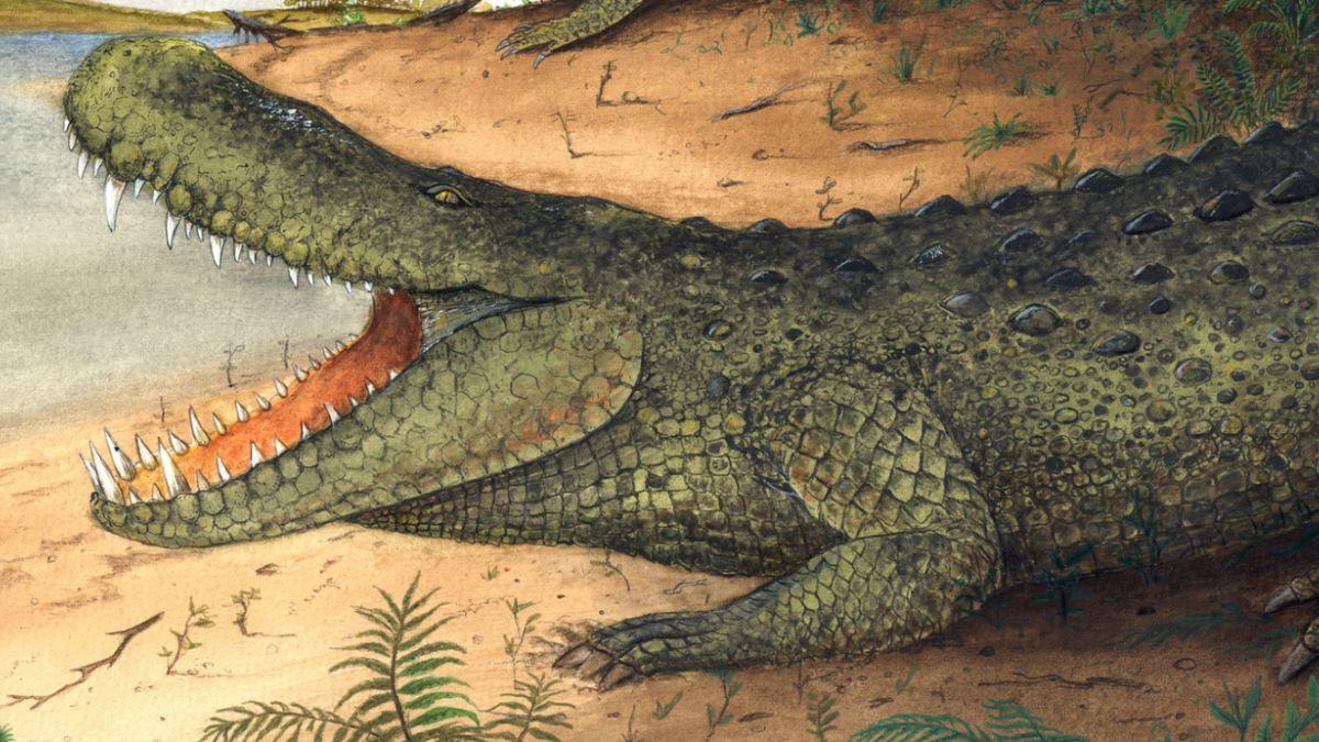 El caimán del Amazonas era más poderoso que un tiranosaurio
