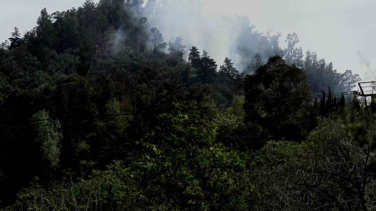 Santiago ha perdido alrededor del 20% de la vegetación en dos décadas